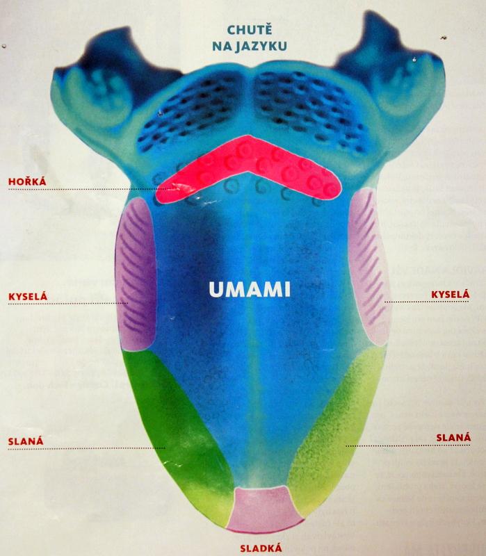 Umami je piata chuť alebo pochúťka, delikatesa a lahôdka.