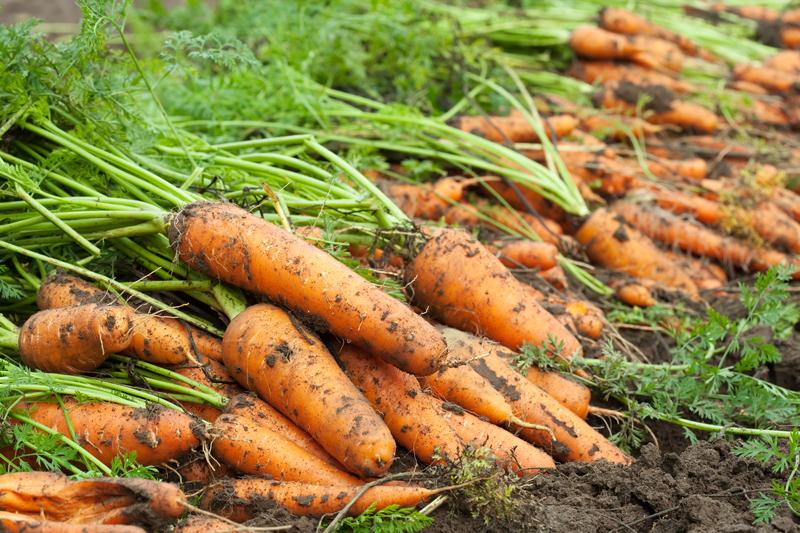 Poľnohospodárstvo na prvom mieste